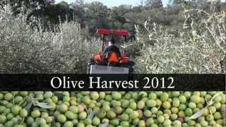 2012 olive harvest report with Greg Miller, Jordan Winery, Sonoma County, California