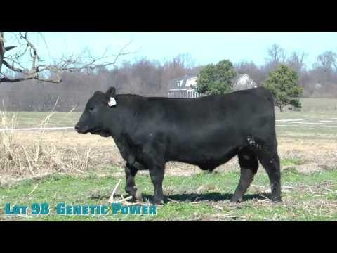 Lot 98  Genetic Power