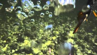 Slovinská jar, video 1