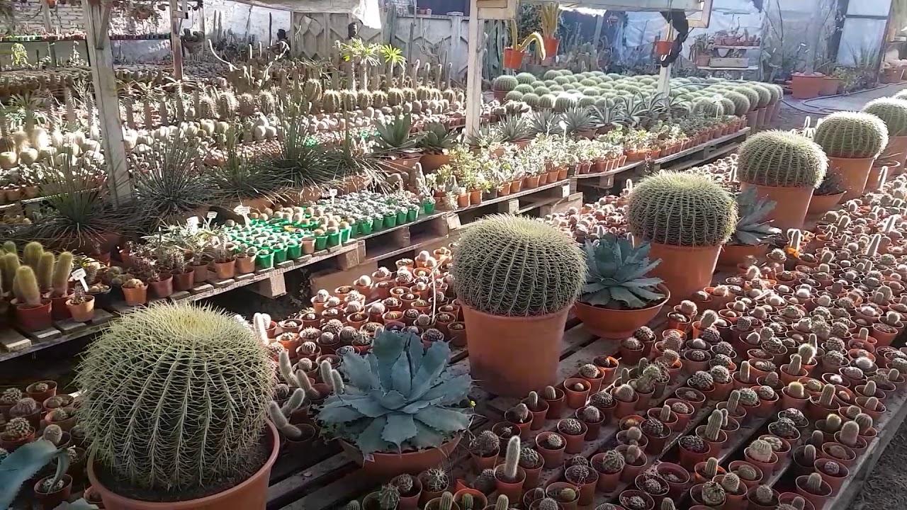 mundo cactus c rdoba capital argentina youtube On viveros en cordoba capital