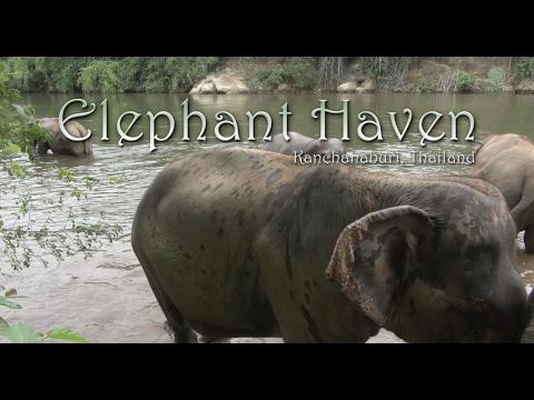 Elephant Haven Kanchanaburi Thailand
