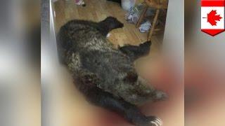 Un homme tue un ours dans sa cuisine après avoir été averti par son chien