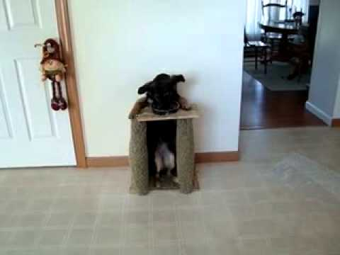 dog high chair revolving hairdresser eating from its youtube