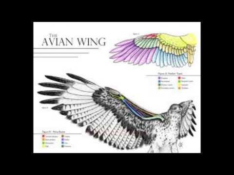 Bird Anatomy Movie