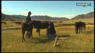 Aghain - Казахи в Монголии-1