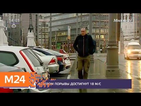 Синоптики предупредили о сильном ветре в Москве - Москва 24
