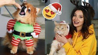 Przebieram zwierzaki w świąteczne kostiumy!