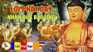 Những lời Phật dạy Nhân Quả Báo Ứng nghe mỗi đêm thay đổi vận mệnh | Phật Pháp Nhiệm Màu