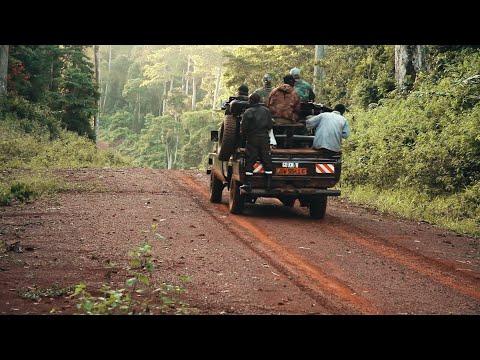Африканский лесной буйвол. Охота на юге Камеруна