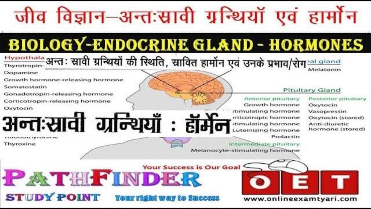 Biology In Hindi Endocrine Gland System Hormones