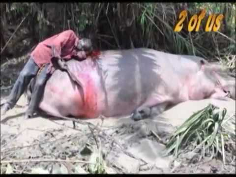 How the African one eyed old Man killed the Hippopotamus