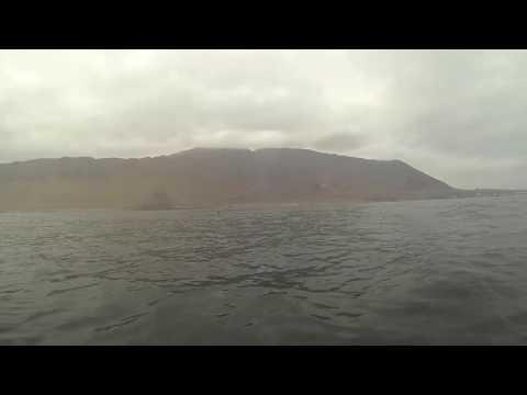 Pescado Furioso, Orcinus Orcas  Iquique   Chile