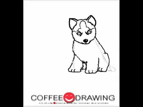 how to draw Siberian husky puppy] สอนเด็กวาดรูปการ์ตูน ลูกสุนัขไซบีเรียน ฮัสกี้ [by coffee-drawing]