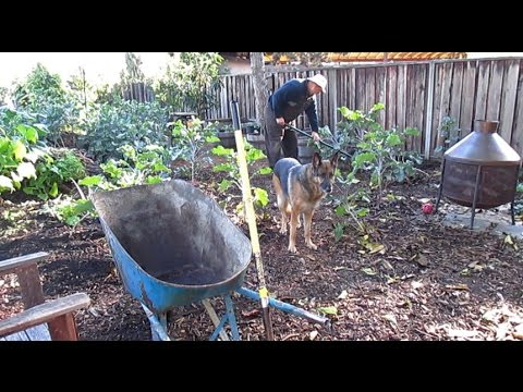 Propagating Edible Gourmet Mushrooms Outdoors Using Cardboard, Woodchips & Straw!