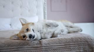 Признаки и симптомы отравления у собаки ➠ Советы ветеринара