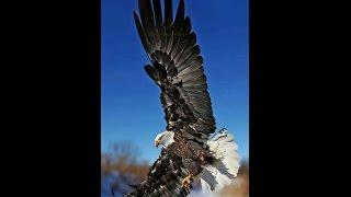 Птицы, слайд-шоу из фото птиц.