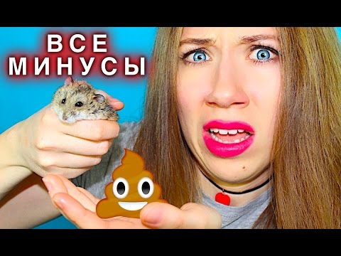 ХОМЯК - ВСЯ