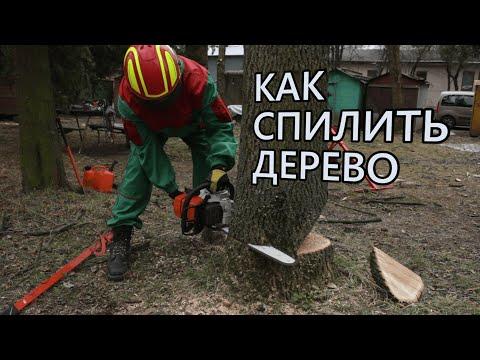 Гороскоп друидов по деревьям и дате рождения