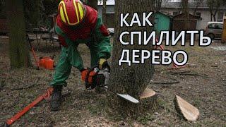 Как безопасно спилить дерево бензопилой(Из видео вы узнаете, как правильно спилить дерево своими руками. Рассказывает Степан Латыпов Директор..., 2016-03-17T14:05:06.000Z)