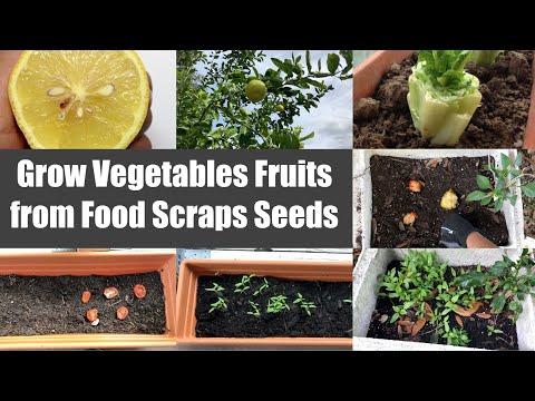 Fun Growing Vegetables Fruits from Food Scraps Seeds Video Episode   Bhavna's Kitchen