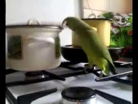 Попугай Орёт. Дай пожрать. Прикол.