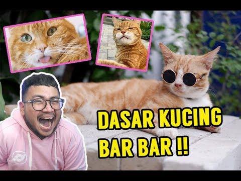 Kocheng Oren Emang Paling Bar Bar Meme Ngakak Ewok