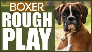 How To Stop Your BOXER PLAYING ROUGH