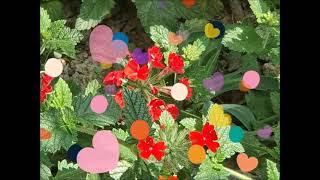 꽃밭에서(동요) 하모니카^^