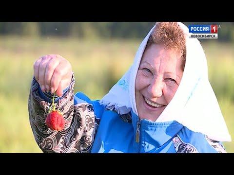 В Новосибирской области стартовал сезон сбора садовой земляники
