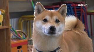 Why dogs reduce stress in classrooms