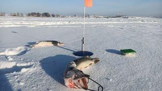 Щука клюет на это что то новое Зимняя рыбалка 2021 Оббурили Плотва с ладонь Живец пропал