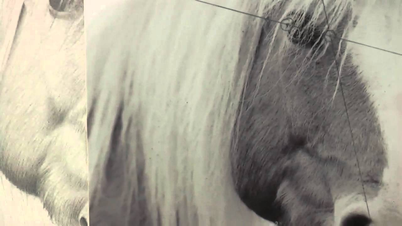 Draw Realistic Horse Hair €� The Same Way You Draw Human Hair!  Youtube