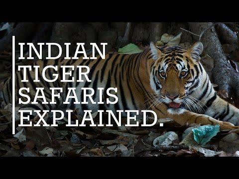 Tiger Safaris In India - Everything You Need To Know |  Rhino Asia Safaris