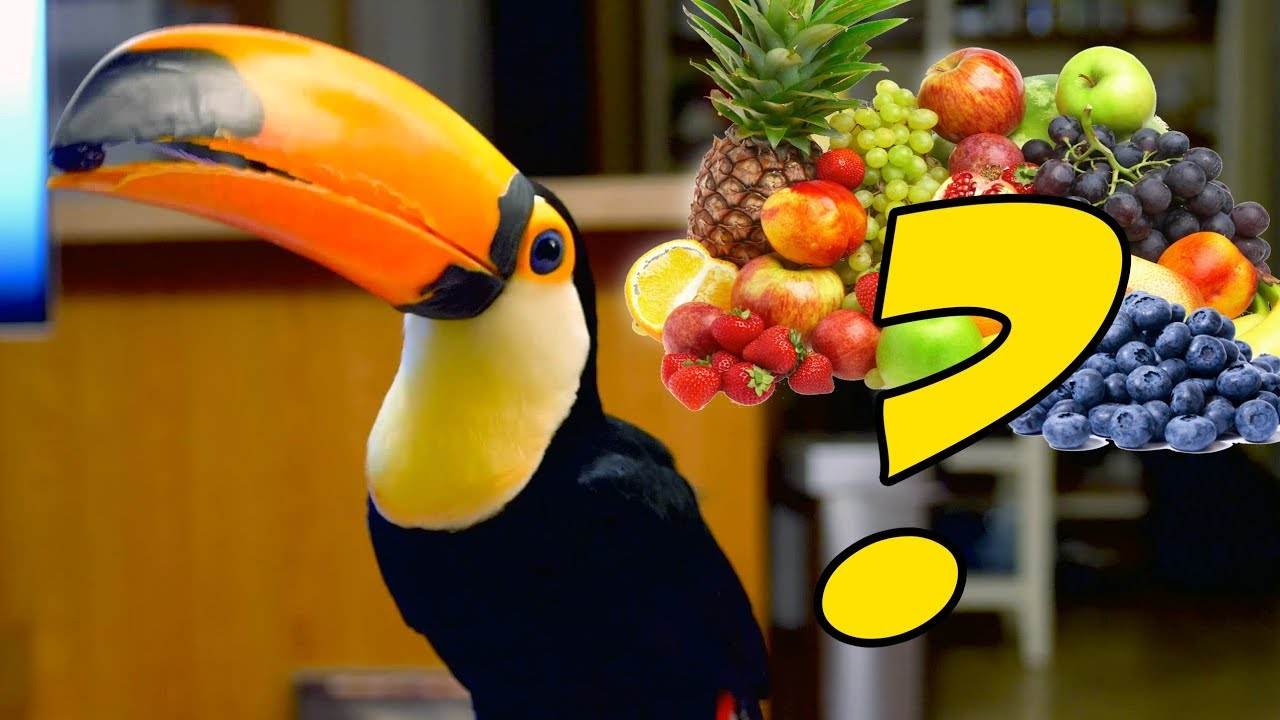 what-does-a-toucan-s-diet-consist-of