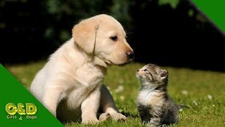 😂Funniest 🐱Cats And 🐶Dogs Compilation June 2019 - Cute Cat and Dog Pet Animals Funny Vines 2019