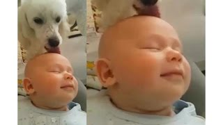 Пудель облизывает ребенка