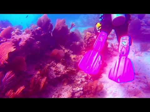 Key West reef dive