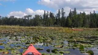 Kayaking a Beaver Pond in Birch Lake near Ely MN - Superior National Forest