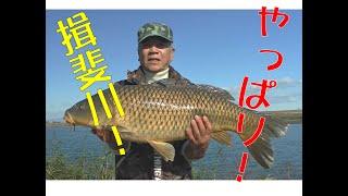 やっぱり揖斐川 津屋川排水機の寒鯉