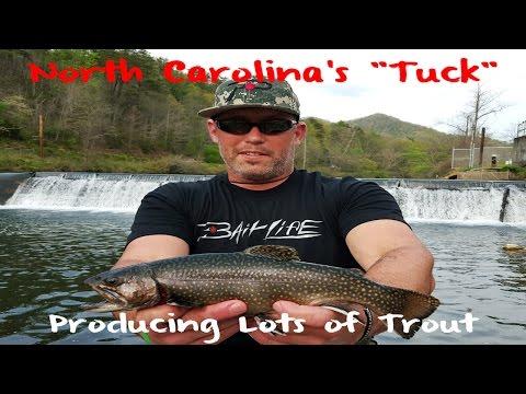 Trout Fishing North Carolina