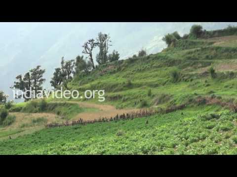 Potato Farm, Uttarakhand