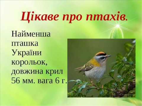 Фільм  'Цікаві факти про птахів'