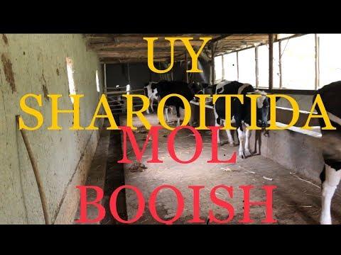 #UY #SHAROITIDA #MOL #BOQISH #SIRLARI