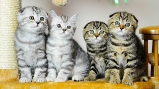Cute Kittens are the best creatures   Funny Cats videos Compilation