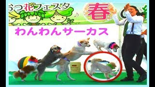 わんわんサーカス(賢くて可愛い犬の面白い映像) thumbnail