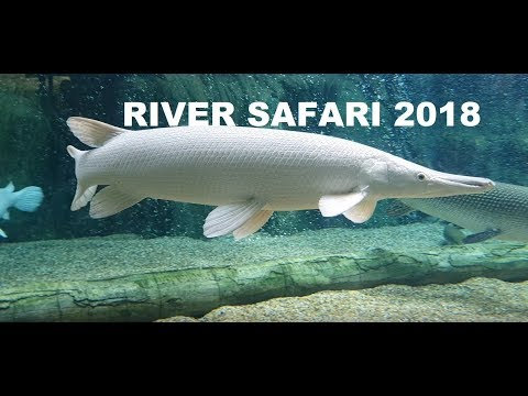 BEST FRESHWATER EXHIBITS! SINGAPORE RIVER SAFARI 2018