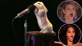 13 Самых Талантливых Животных в Мире!