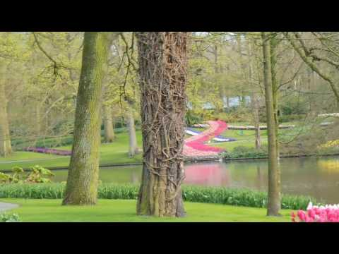 Keukenhof 2016   (3)   + complete photo album