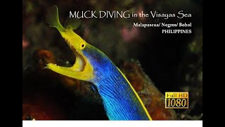 MUCK DIVING in the Visayas Sea - Philippines