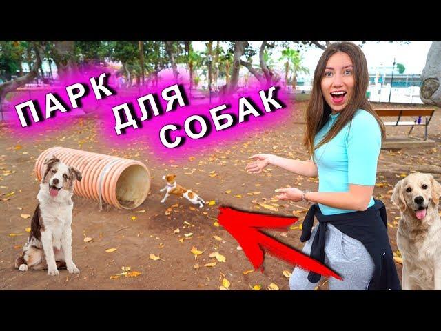 ПАРК ДЛЯ СОБАК ПЕРВАЯ РЕАКЦИЯ Собаки Джины Канары | Elli Di Pets